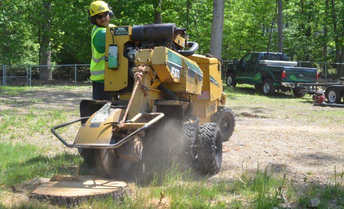 Removing a Tree Stump