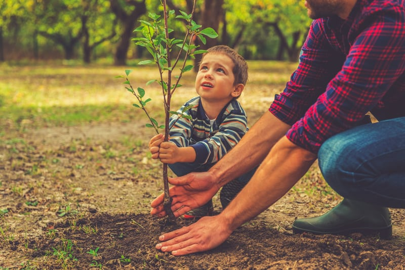 Boy Helping Father Plant a Tree