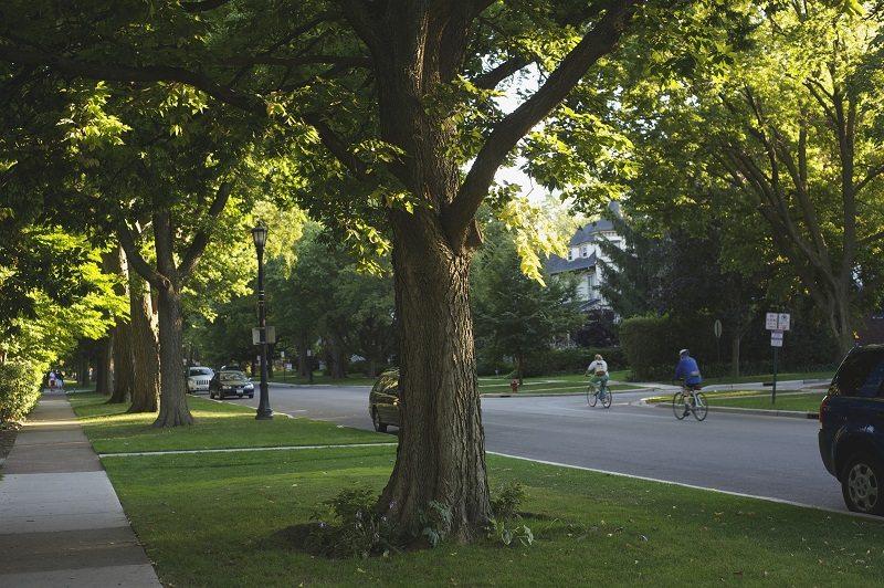 Suburban Street Lined Trees