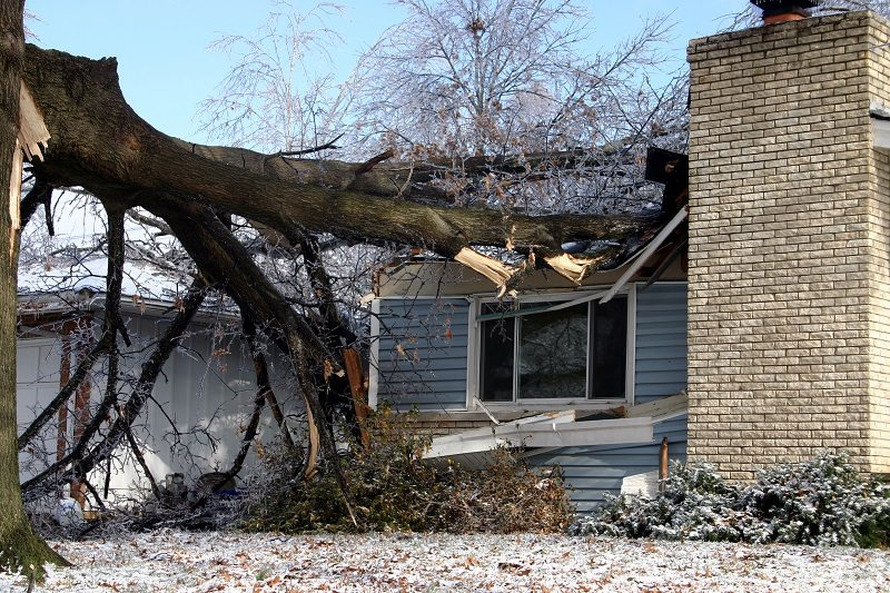 tree fall home accident storm damage
