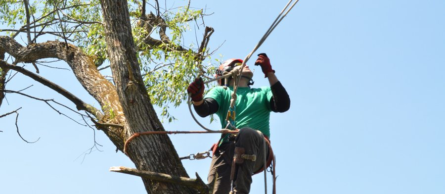 Tree Removal by Certified Tree Specialist