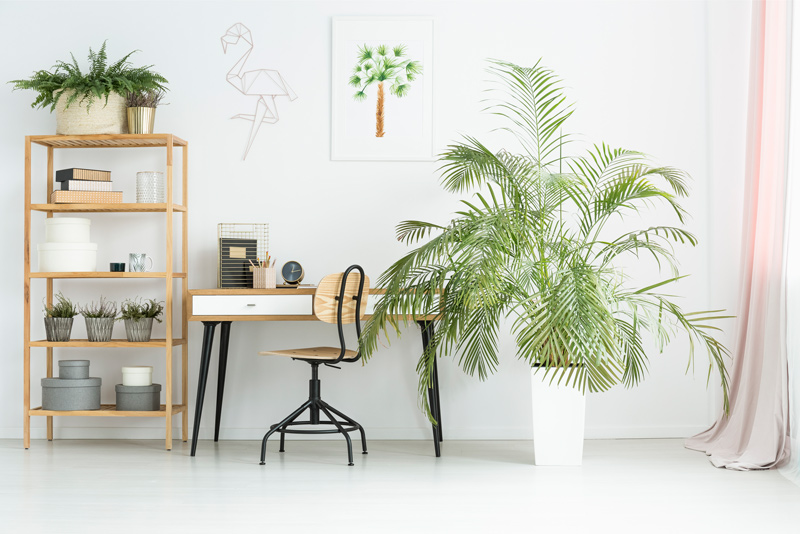 How to Care for an Indoor Tree
