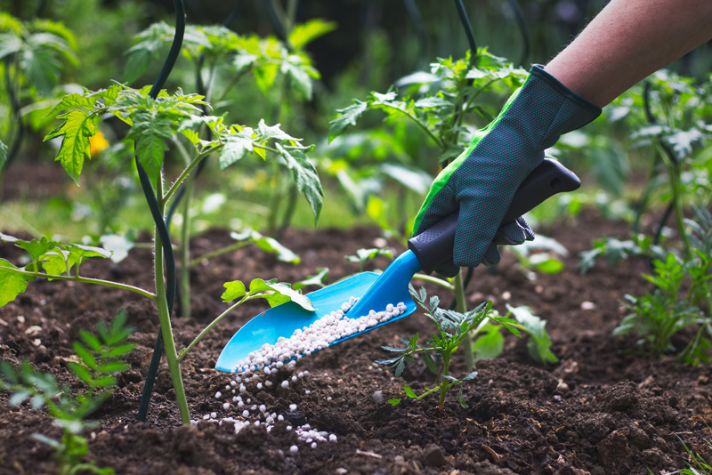 Feed Soil with Fertilizer