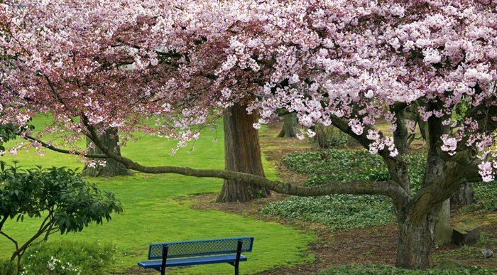 Flowering Trees in Park