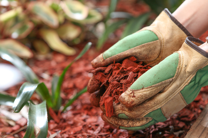 Adding Mulch to Garden