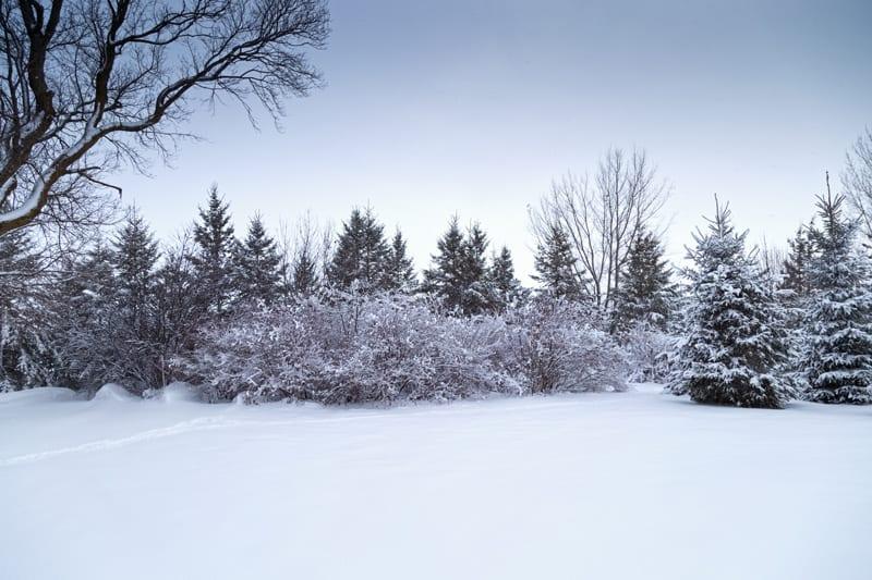 Tree Line in Winter