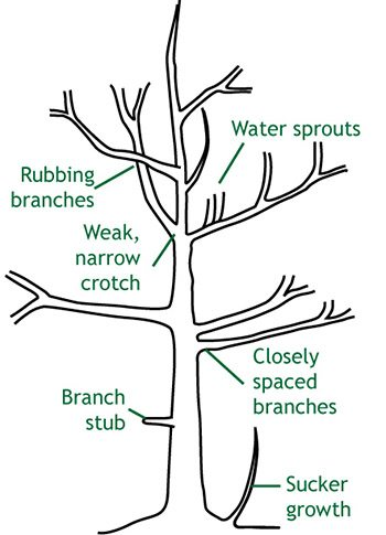 Reasons to Prune a Tree