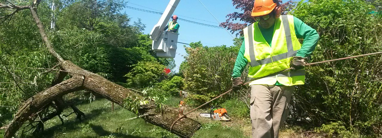 Removing a Damaged Tree