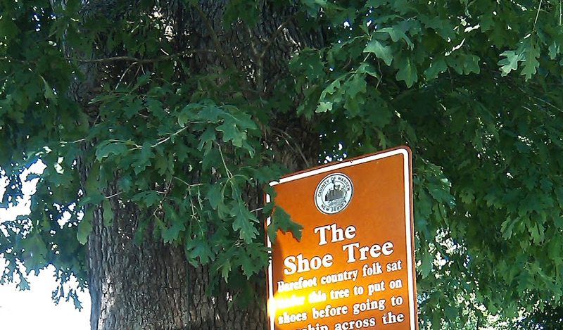 Historical Trees in NJ - The Shoe Tree