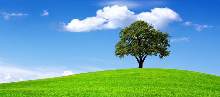 Majestic Tree on a Blue Sky