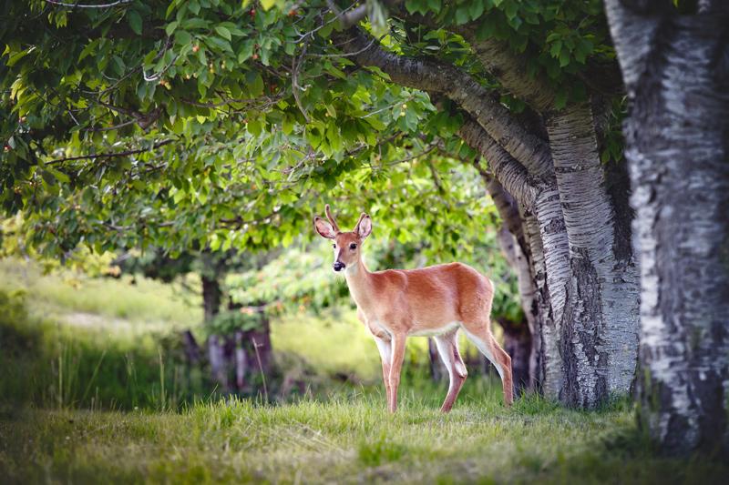 Deer standing near group of trees