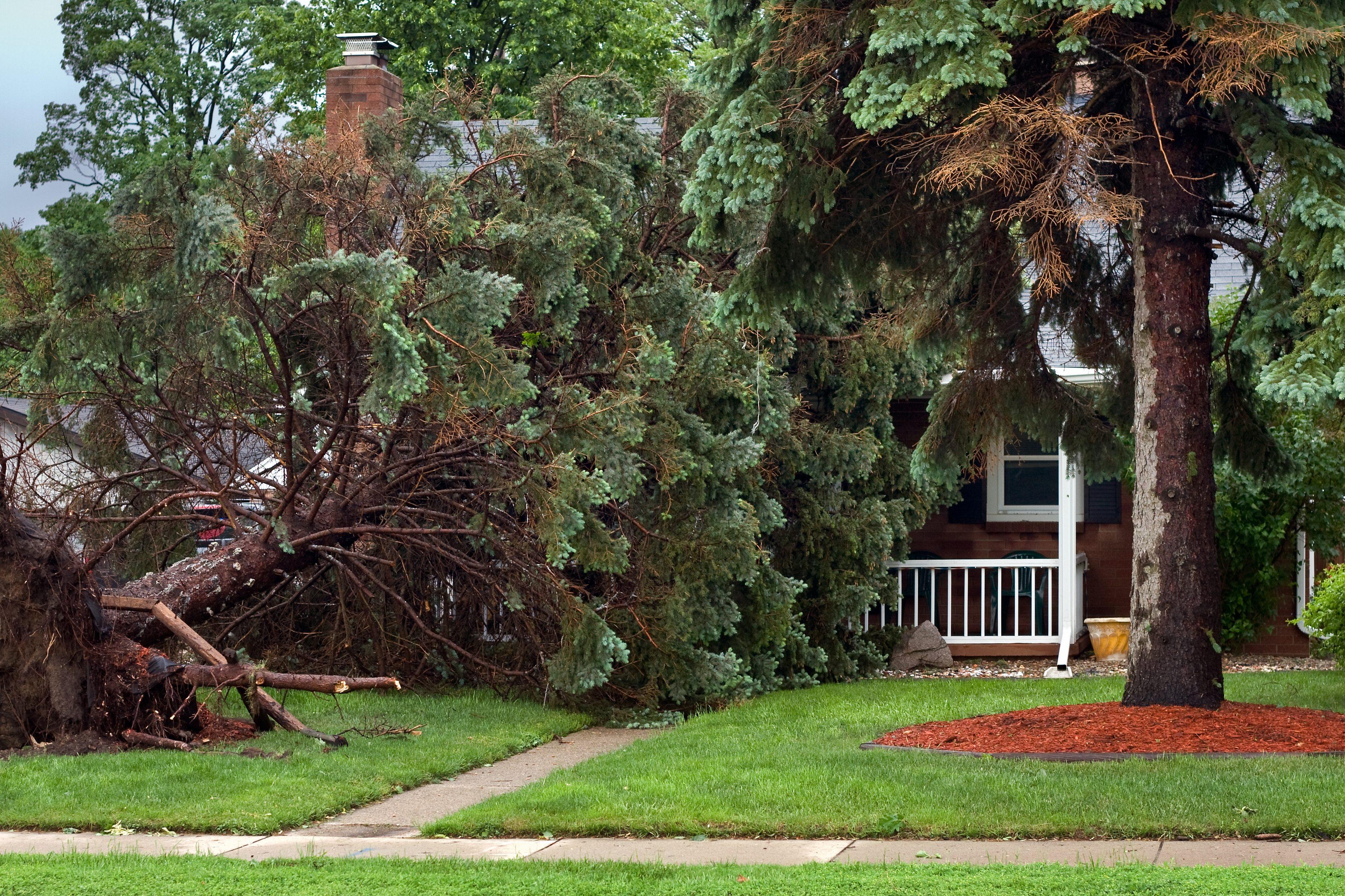Tree Fallen on House - Storm Damage