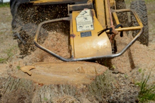 Removing a Tree Stump