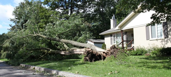 Tree that fell on a house during a storm
