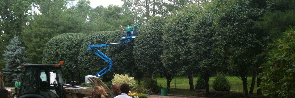 Pruning Tall Trees in NJ